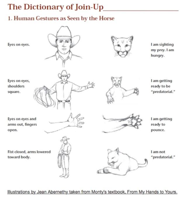 Monty Roberts Horse Language